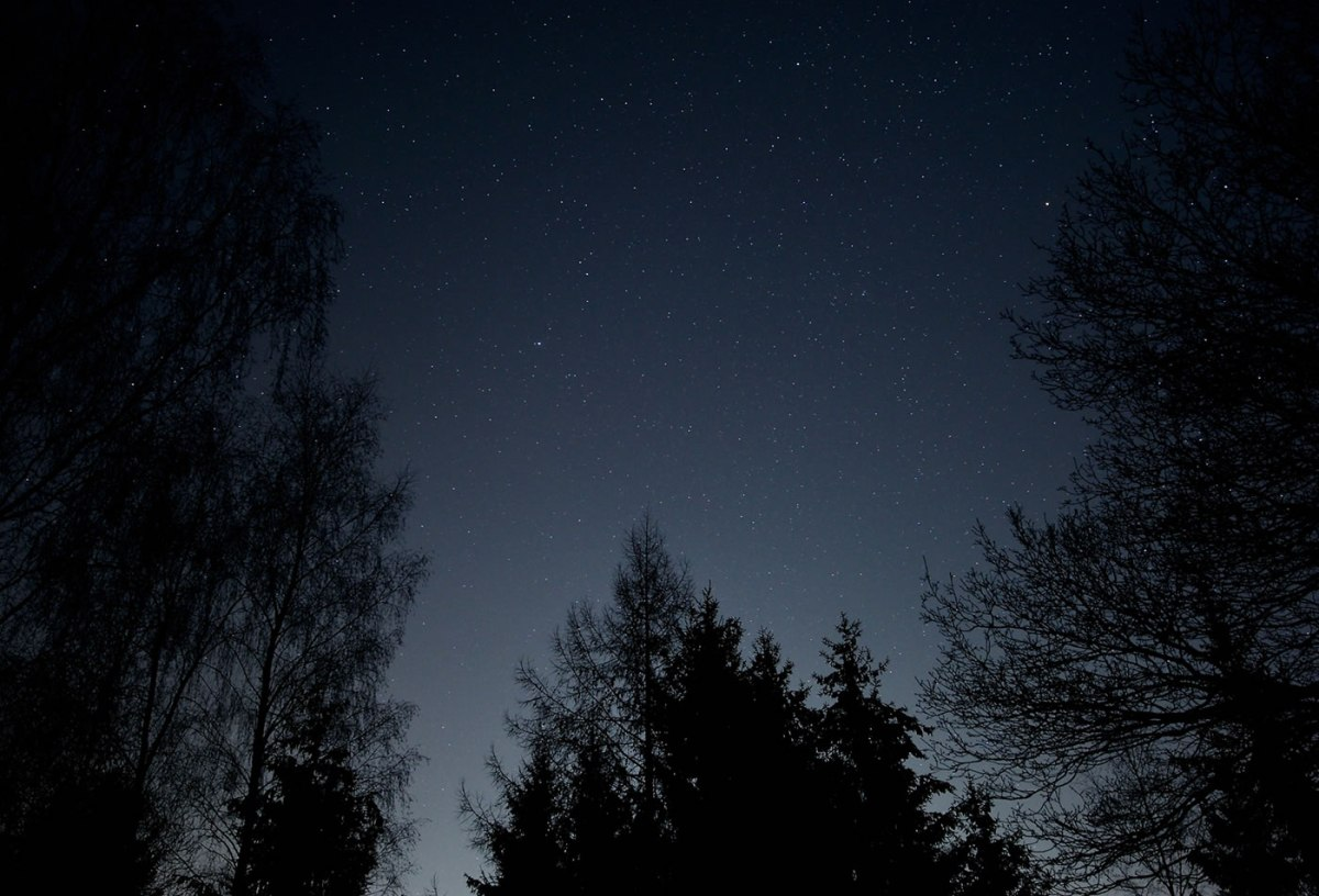 Starry sky in the woods